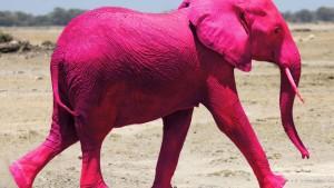 Roze Olifant2 Probeersel